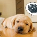 うつ病の症状で初期症状とは?どんな感じになるの?